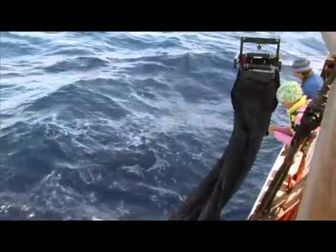 MOCNESS: An Adventure in Practical Oceanography