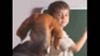Dog Training- How To Potty Train a Dog