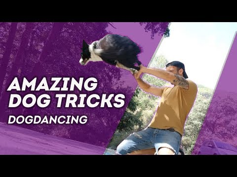 🎶 AMAZING dog tricks by border collie Nüwa & Kitsune ( Vol. 2 ) dogdancing