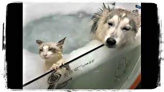 КОТ и СОБАКА, Друзья или Враги? Приколы с Животными подборка | Funny Cats and Dogs #628