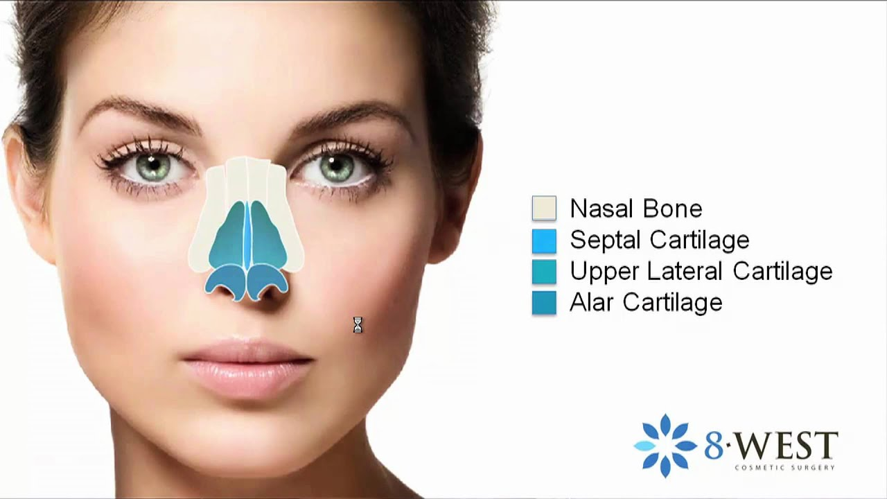 Nasal Anatomy | The Nose: Anatomy, Form & Function for Rhinoplasty ...