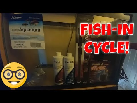 Setting Up My NEW 20Gallon/ How to Setup a Simple Freshwater Aquarium