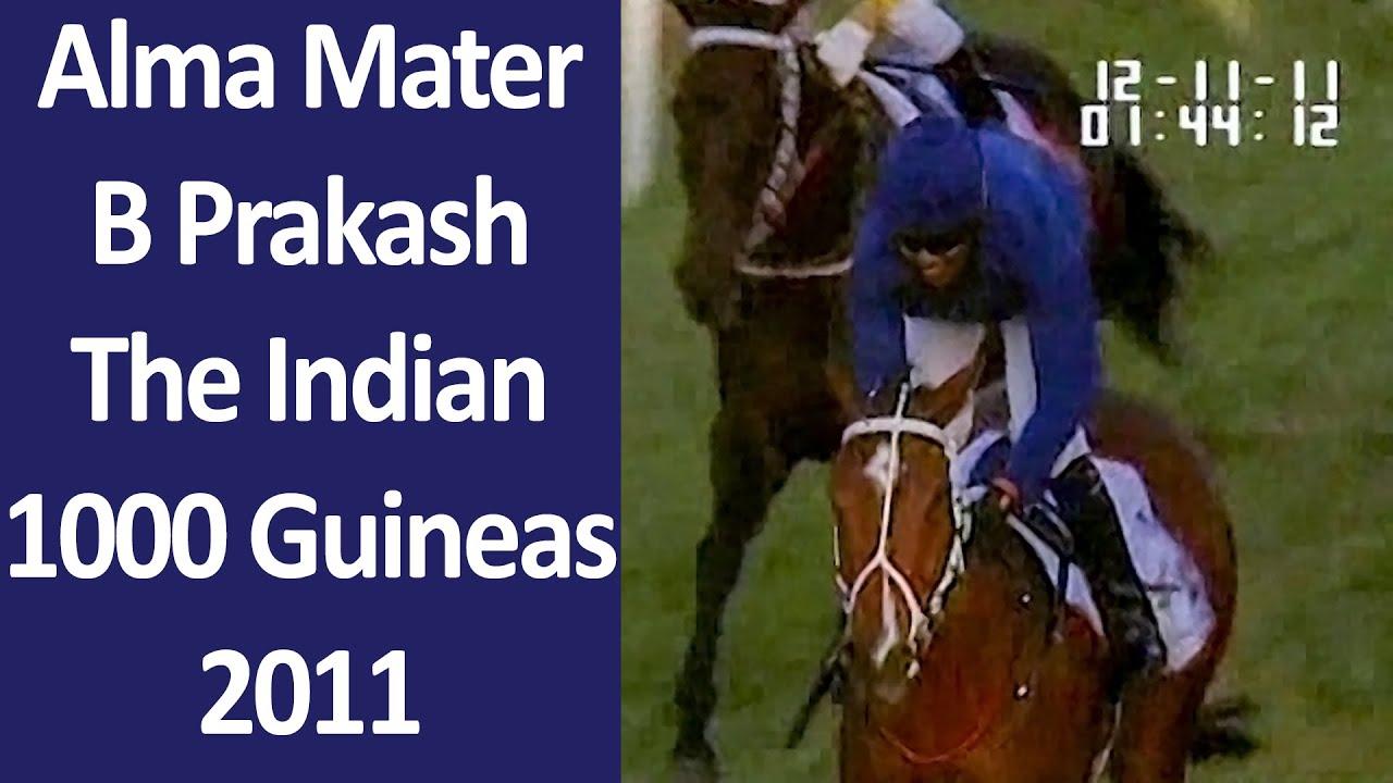 Alma Mater with B Prakash up The Indian 1000 Guineas 2011