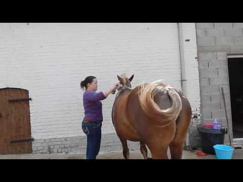 comment soigner la dermite estivale de son cheval avec equibao j 4 youtube. Black Bedroom Furniture Sets. Home Design Ideas