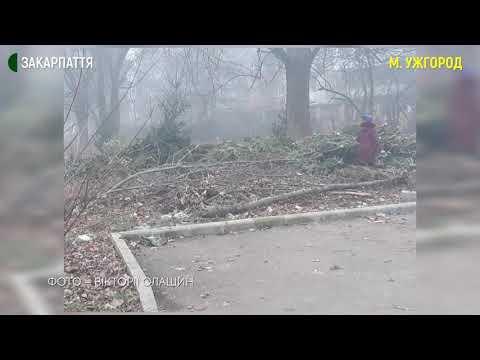 В Ужгороді підприємці викинули 1000 непроданих ялинок
