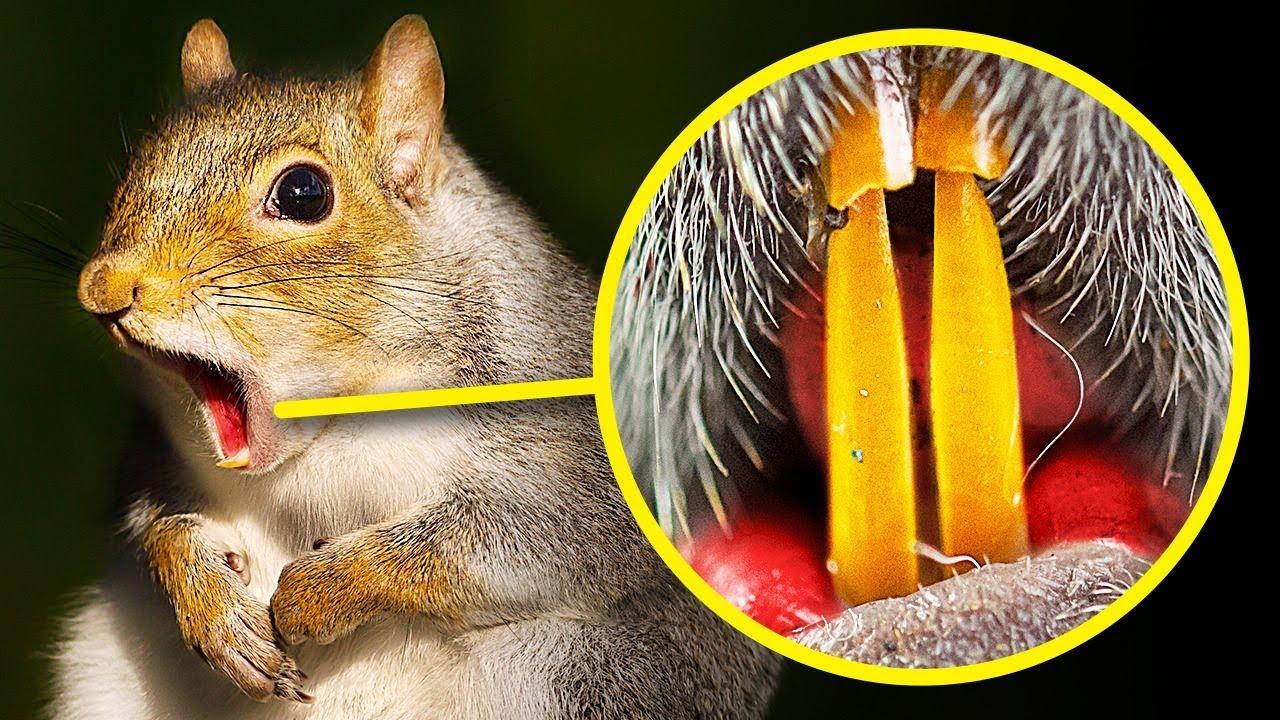 أسنان السنجاب برتقالية اللون وإليك +٥۰ حقيقة غريبة ومثيرة للفضول عن الحيوانات