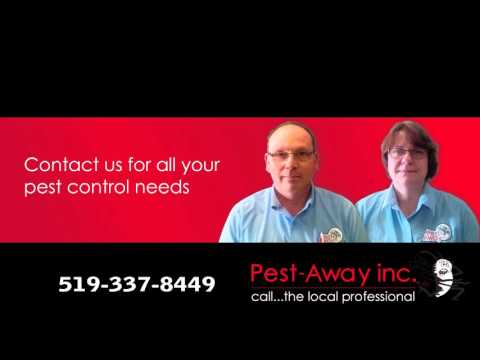 Pest Away - Local Business of the Month