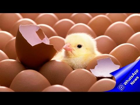Как отличить поддельные яйца от настоящих