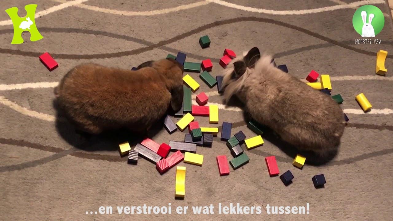 konijnen 3