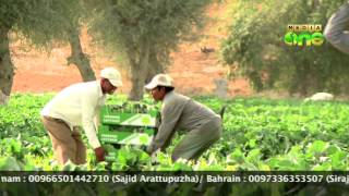 Weekend Arabia 50th Episode Part2- Success story Vijayan in Agricultur at Ras al khaimah