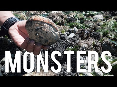 Catch & Cook : CLAMMING IN WASHINGTON