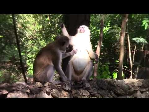Kenya Haller Park-Mombasa-Kenya 2015 Full HD