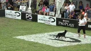 Flying Disc - 2013 Purina® Incredible Dog Challenge® St. Petersburg