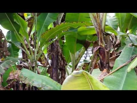 Organic Farming in Singapore.  Video 4 of 10