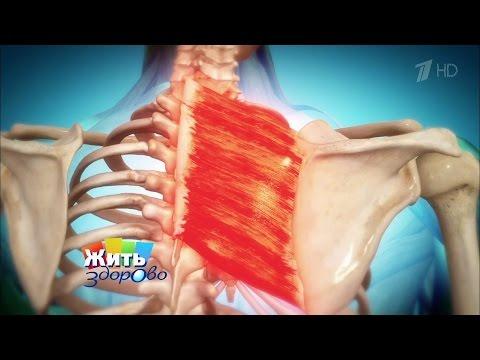 Под лопаткой болят мышцы