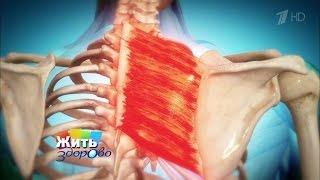 видео Гимнастика для лечения плеча, упражнения для лечения боли в плечах