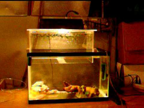 Cheap 2 DIY Aquarium Switch DEMO Vacuum Fish Tank