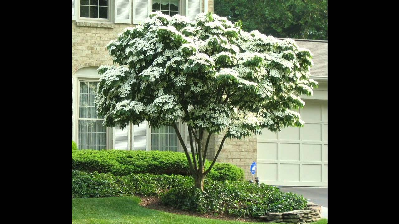 Small Patio Trees Ideas You