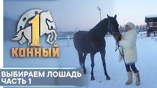 Выбираем лошадь. Если вы решили купить коня...
