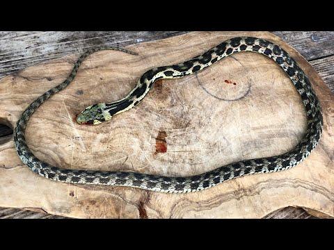 噛まれたら即死亡。日本一危険な猛毒ヘビを捌いて食う。