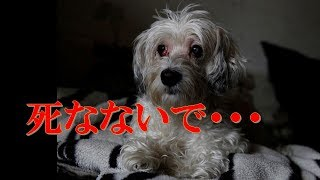 yahooニュース https://headlines.yahoo.co.jp/ *おすすめ犬動画* ハ...
