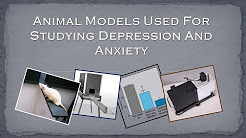 Animal Models Used For Studying Depression And Anxiety