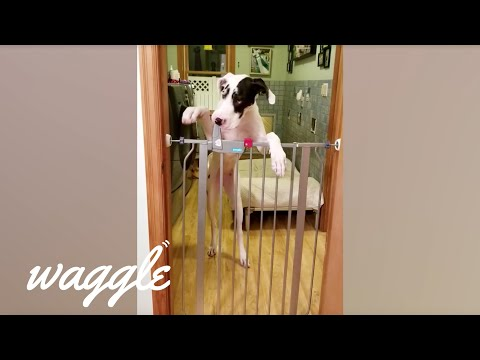 Smartest Dogs | Funny Dog Compilation