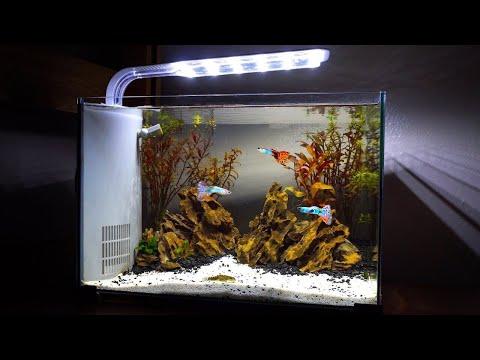 ikan-hias-|-guppy-|-koi-|-louhan-|-membuat-aquascape-mini-|-membuat-aquarium-mini-|-guppy-fish
