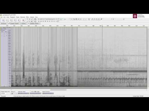 Cleaning Up Frog Calls with Audacity