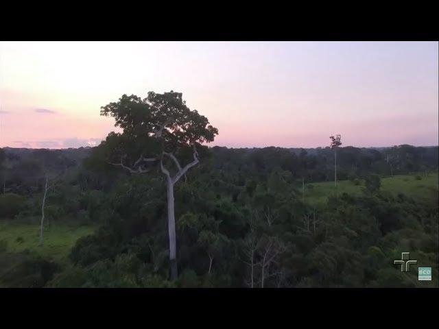 ONG que ajuda na conservação da Floresta Amazônica