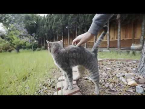 Sadie, the killer cat