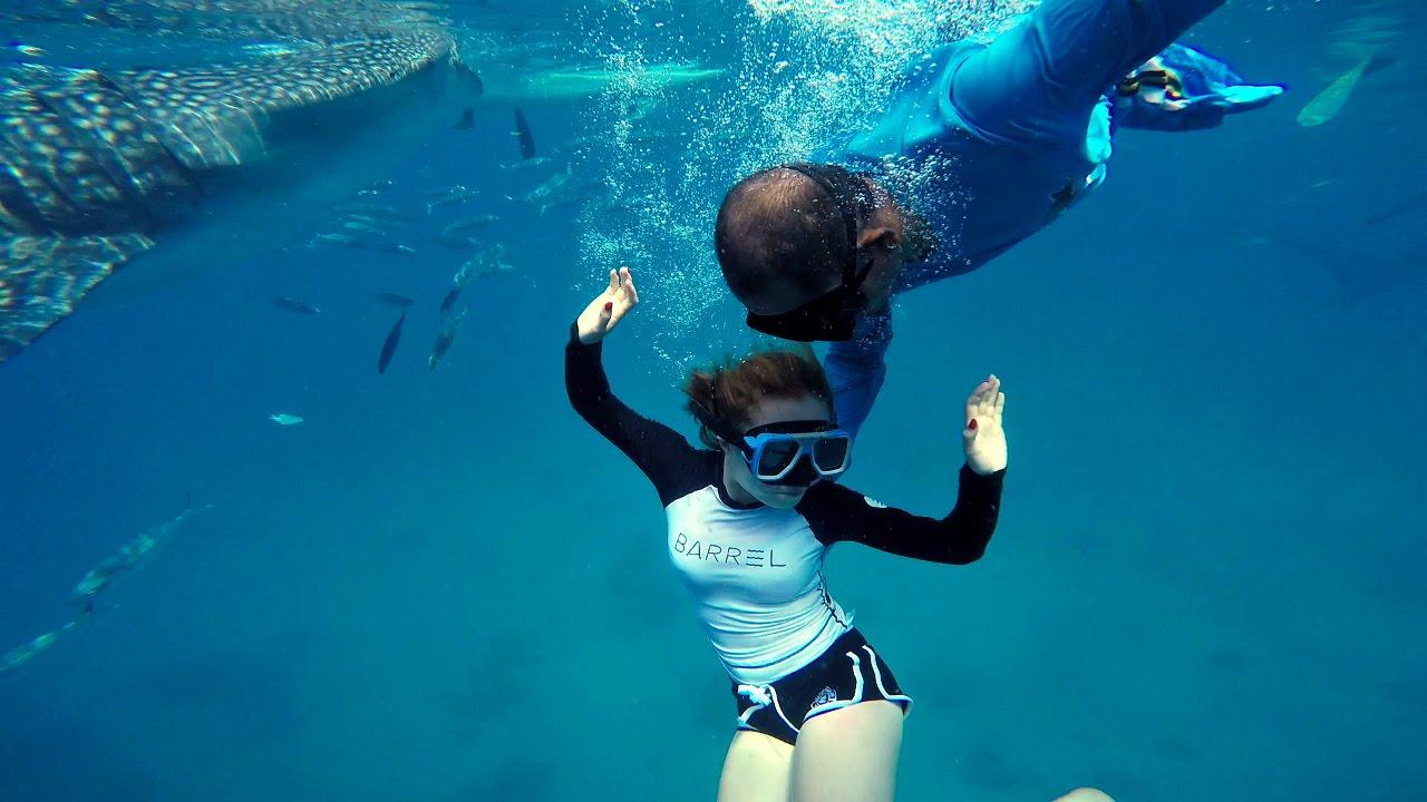 تجربة السباحة مع قرش الحوت !!!! Whale shark