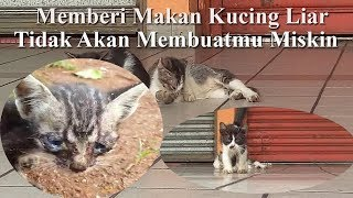Download Video Viral. Video Kucing Liar. Kucing Liar Kelaparan sedih. MP3 3GP MP4