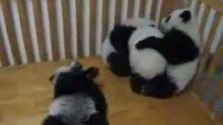 Приключения наркомана павлик 8 серия В гостях у панды!!!