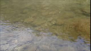 チヌーク改の泳ぎ方.