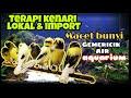 Terapi Kenari Lokal Import Macet Bunyi Terapi Air Aquarium  Mp3 - Mp4 Download