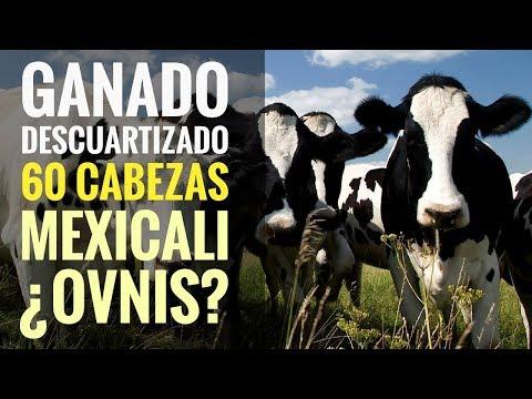 """""""LUCES EXTRAÑAS"""" descuartizan 60 cabezas de ganado en MEXICALI: STALIN VALLE."""