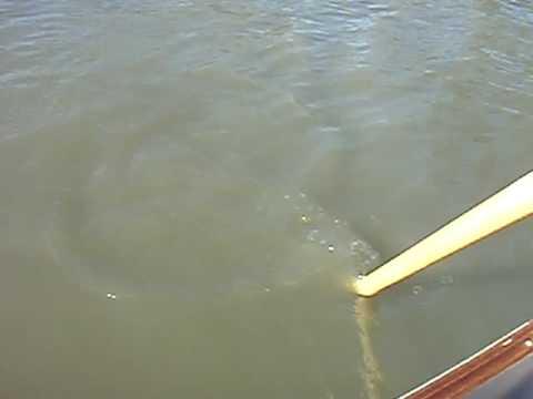 hqdefault - Pourquoi voit-on trouble dans l'eau ?