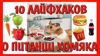 видео Как, чем накормить хомяка