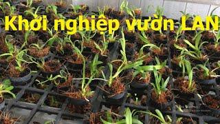 Gambar cover 4 Triệu khởi nghiệp trồng LAN từ cây cấy mô