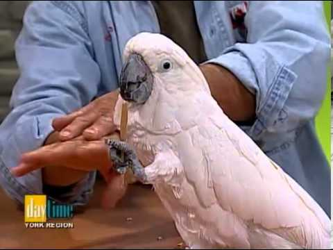 Bird Whisperer - Daytime TV show