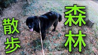 おはようございます☀ 今日はボス君と森林散歩です     短い動画ですが最...