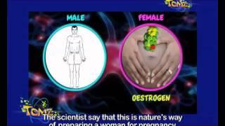 TOMz S3 E16 - Oestrogen vs. Testosterone