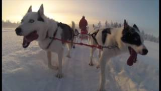 Husky Tour in Finland - Lapland -Kittilä in 2013.