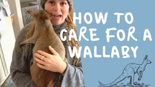 How to care for a Wallaby