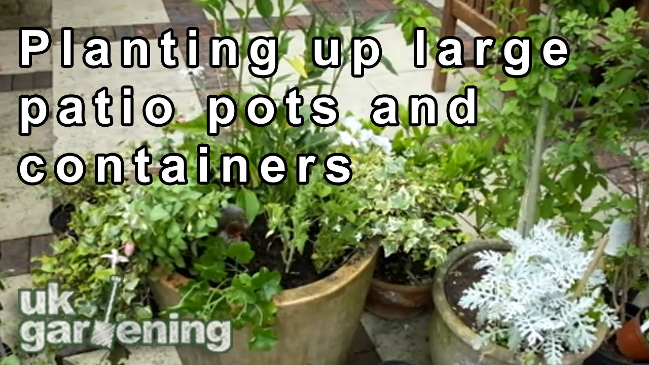 Planting Up Large Patio Pots For A Summer Display.   YouTube