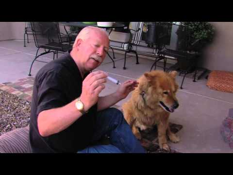 Treating Dogs and Other Pets With Colloidal Silver