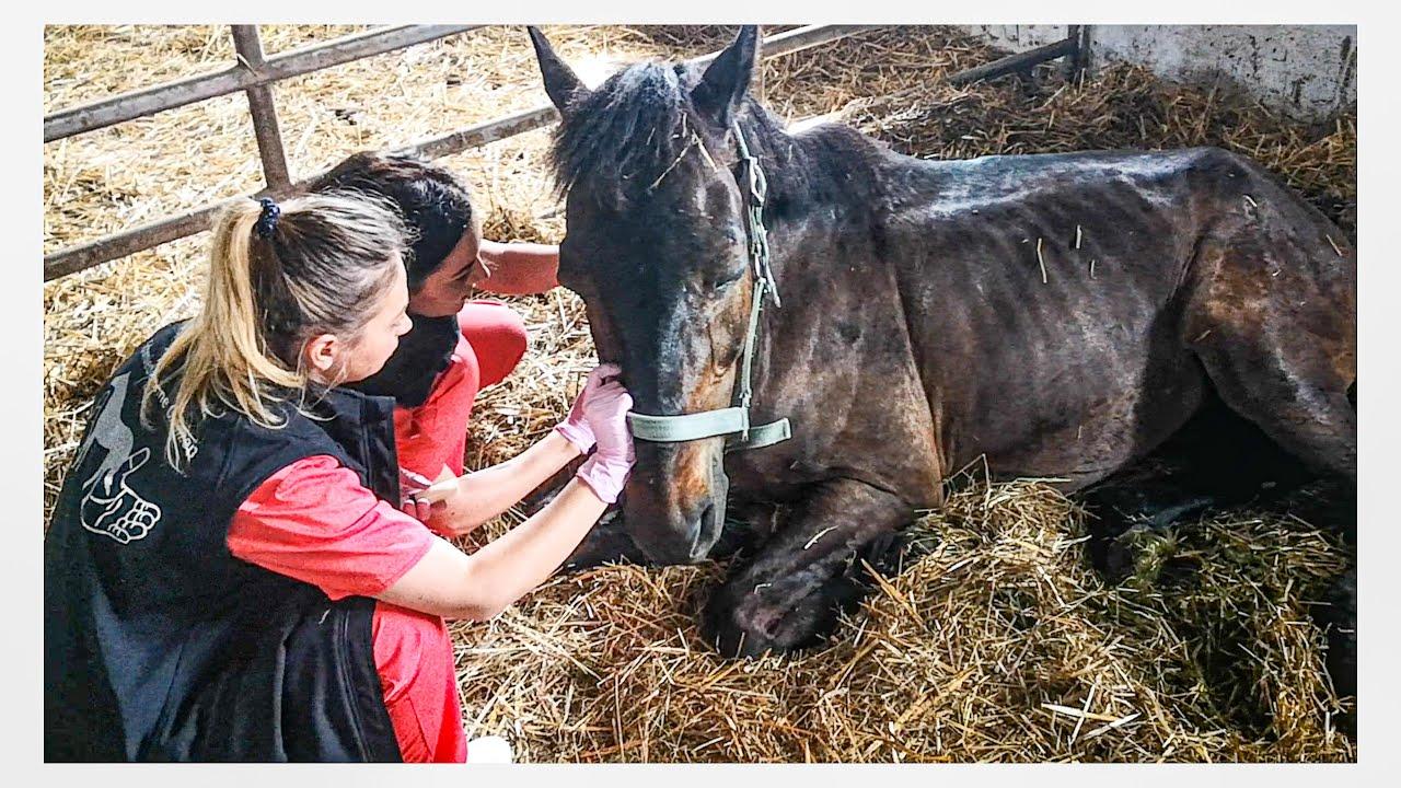 Rettung in letzter Minute - Die Pferderetter in Rumänien