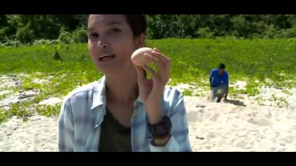 Penangkaran Burung Maleo Pulau Haruku Ambon Youtube