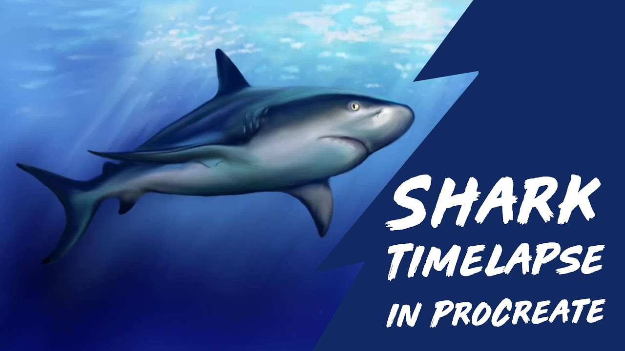 shark time lapse painting on procreate app for ipad youtube